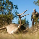 How to Skin a Deer - Complete Guide cover