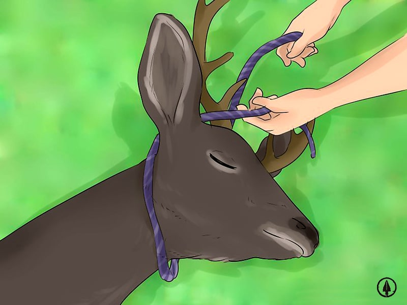 How to skin a deer: the golfball method